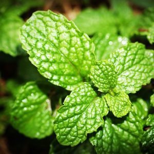 Essential Oils Care - Peppermint Oil
