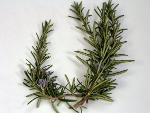 Essential Oils Care - Rosemary Oil