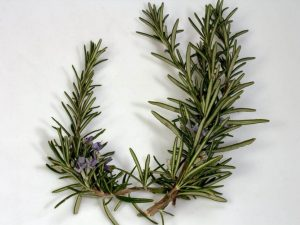 Essential Oils Care - Rosemary Oil Skin Care