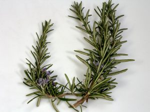 Essential Oils Care - Rosemary Oil Skin Care 1